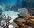 Mares y costas de la región Golfo de México y Mar Caribe